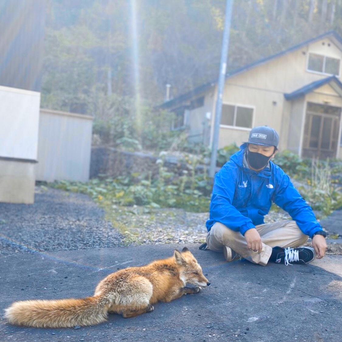 岩部クルーズ平野の北狐のゴン